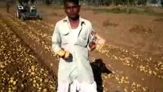 ProGibb in Potato Gujarati Farmer