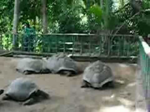Giant Tortoise Doggy Style - Rock The Boat Remix