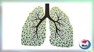 Plantas curativas eficaces para limpiar los pulmones