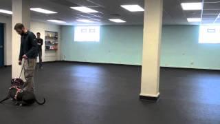 Training An Aggressive Pit Bull | K9 Connection Dog Training | Buffalo NY
