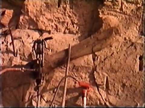 Происхождение 6 8 записи окаменелостей