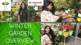 Winter Garden Overview - Terrace Garden Update || March 2019