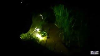 Berburu Ruak Ruak Malam Kubu Hunting Ep Pertama Awesome Bird Trap Catch Bird