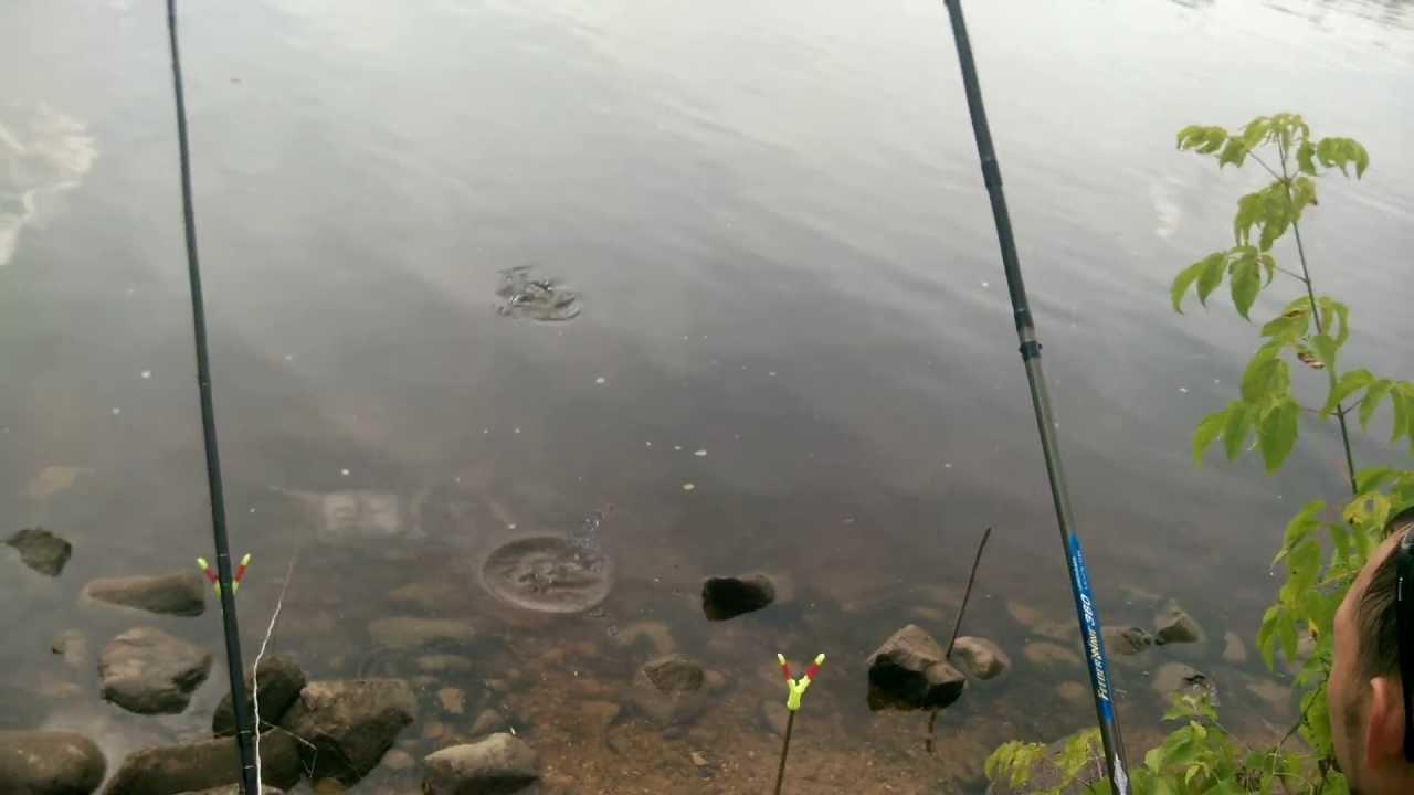 рыбалка в дмитрове на канале им москвы