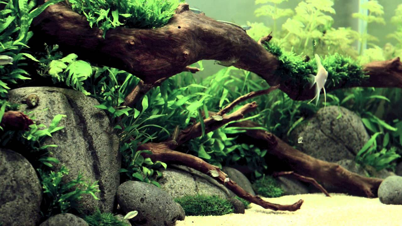 ADA Style Aquascape 18 Days Old - YouTube