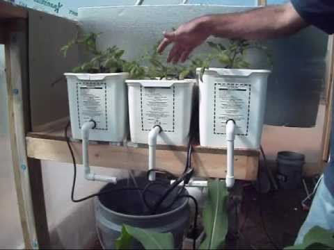 Raised Beds, Early Hydroponics, &amp  Dutch Buckets