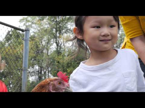 Shady Side Academy Junior School Welcomes Two Chickens!