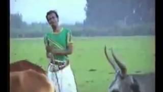 Jemal Husen wallo kamise song