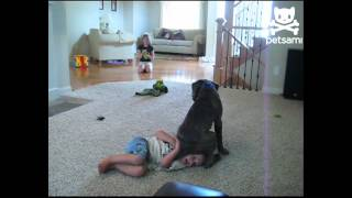 Clueless canine squats on kid's head