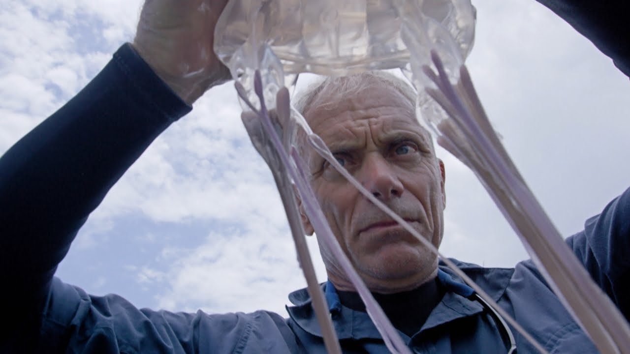 [How Do You Go About Catching A Super Venomous Box Jellyfish? This Is How!] Video