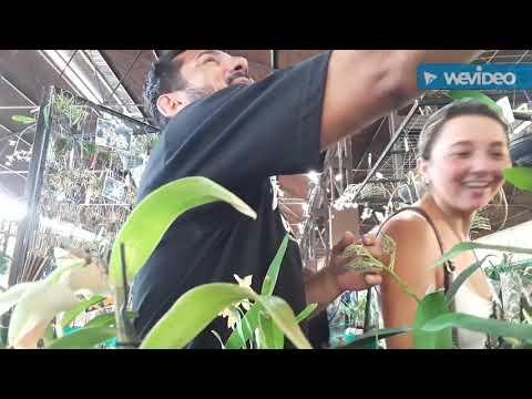 Trigésima nona Grande Feira e Exposição Nacional de Orquídeas da AMO 04