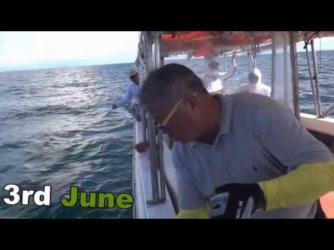 2013 馬來西亞山打根釣魚 Malaysia Sandakan Fishing
