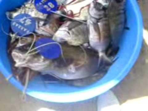 Les bases de la pêche et la chasse