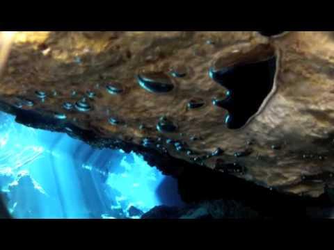 Playa Del Carmen Cave Diving Cavern Dive Playa Del