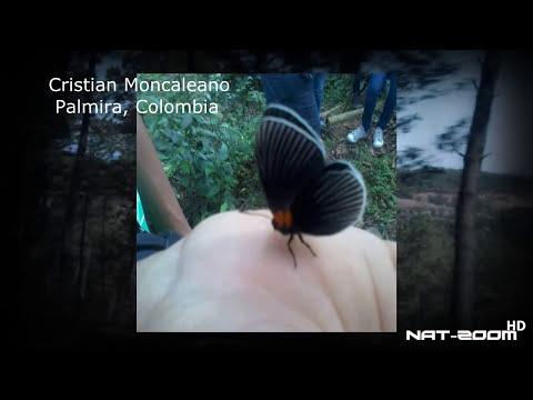 El insecto más bello del mundo? luciernagas @OxlackCastro