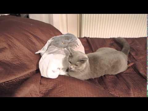 予想外?!突然動き出すビニール袋にビックリする猫