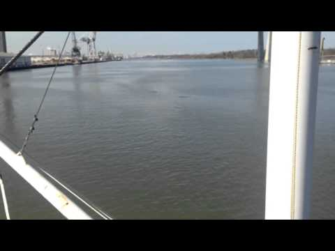 Dolphins during the Savannah River Tour