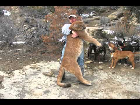 Mountain lion hunting nevada youtube for Fishing license nevada