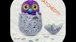 HATCHIMAL! unboxing and how to hatch really fast.