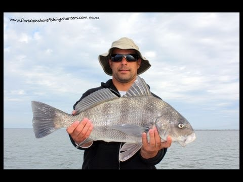 Mosquito Lagoon Fishing Charters for Red Drum and Black Drum
