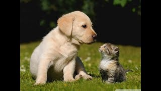 Must Watch New Funny dogs, cats & baby compilation video | Animal Pets funniest video