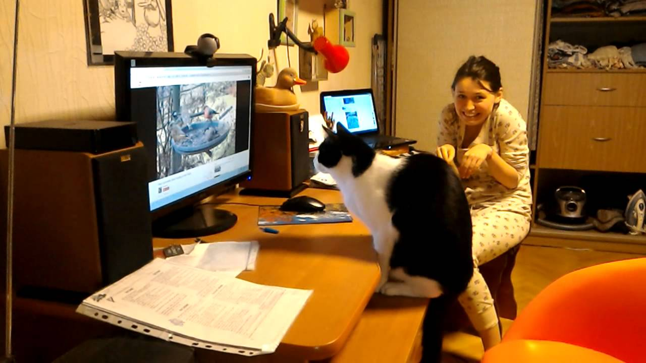 [Girl has a cute reaction when cat bumps monitor] Video