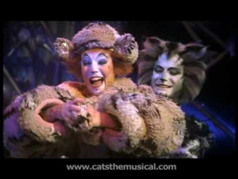 Gumbie Cat Videos