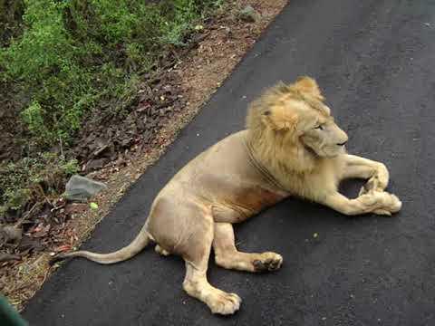 Indira Gandhi National Park Sanjay Gandhi National Park