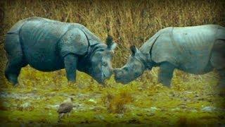 On the Track of the Unicorn: Indian Rhinoceros (full documentary)