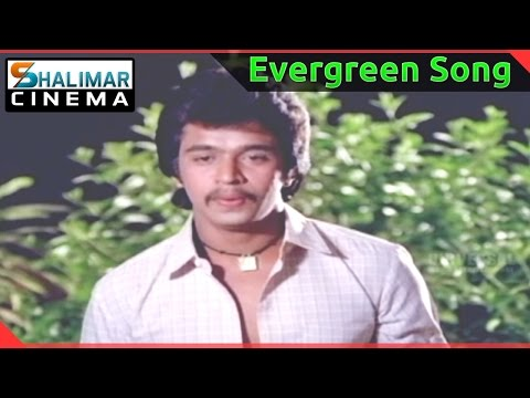 Evergreen Hit Song of the day || Rani Ranamma Video Song || shalimarcinema || Shlimarcinema