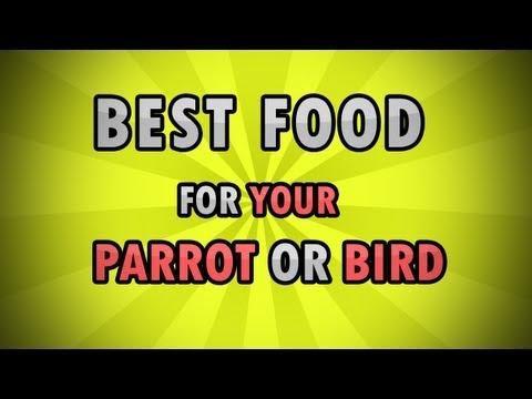 Best Healthy Food Diet for Birds/Parrots