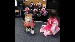 Bé gái đáng yêu trong lễ hội búp bê tại Nhật Bản