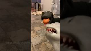 SHARK PUPPET TRIES EGG CHALLENGE WITH DOG!!!!!