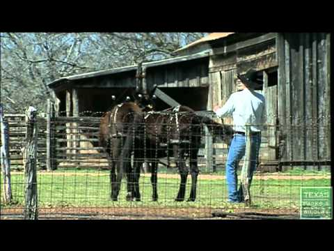 LBJ State Park Sauer Beckmann Living History Farm, Texas Parks and Widlife [Official]