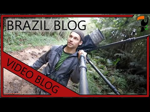 Video Blog - Brazil (By Wildlife Photographer Glenn Bartley)