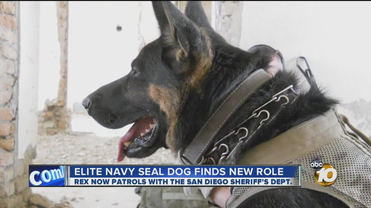 Navy Seal Combat Dogs Elite Navy Seal Dog Finds New
