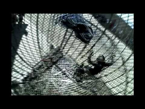 Harley Vs Globe Of Death