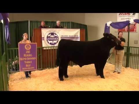 2015 Michigan Livestock Expo Sale-abration Auction