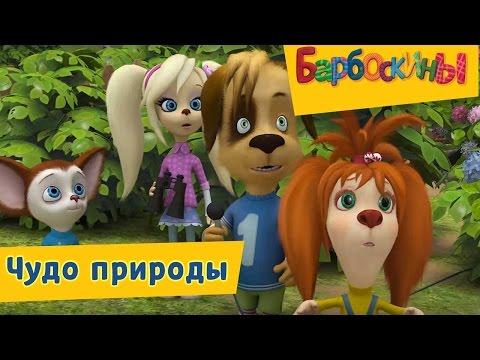 Барбоскины - 😮 Чудо природы😛 Сборник 2017 года