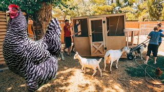 Tear it down! These spoiled chickens deserve a CHICKEN COOP PALACE!