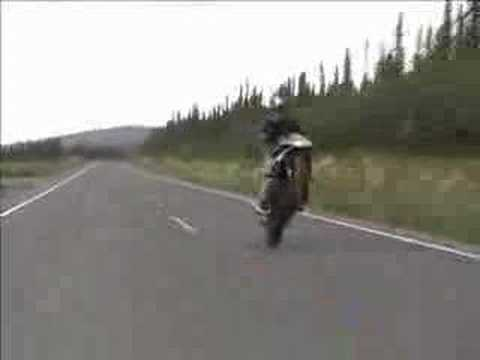 954RR Wheelies Stoppies Burnouts