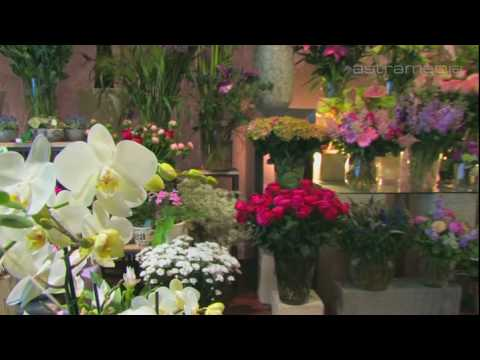 Blumen Bronold , Wien; Cut flowers, potted plants and decor: Commercials / Promotional: ...