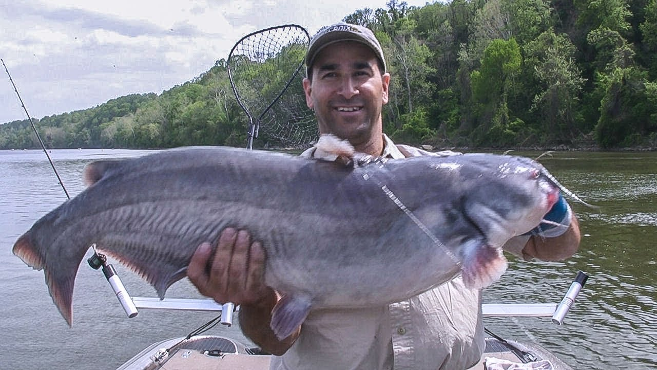 Potomac river blue catfish tidal river fishing youtube for Blue cat fishing
