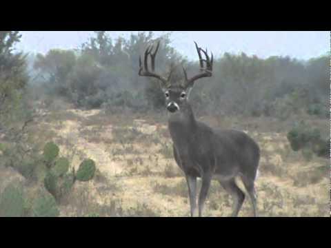 deer hunting with jesus essay
