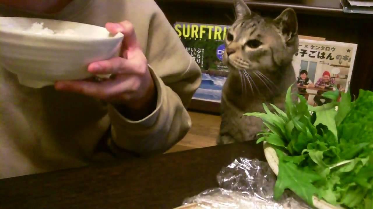 【画像】テレビ番組のパンチラ★86 [猫禁止] [無断転載禁止]©bbspink.comYouTube動画>1本 ->画像>5827枚