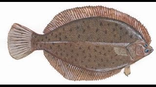 Flounder curry recipe
