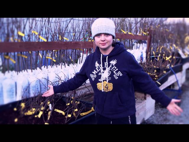 How to Choose and Plant a Bare Root Fruit Tree