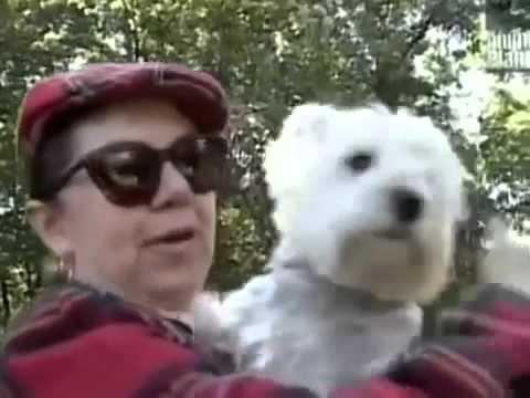Все о собаках. Белый уест, хайленский терьер