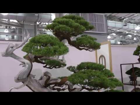 2013 Taiwan Bonsai Exhibition(1).Precious Bonsai,第18回全國盆栽展,華風獎 逸品獎,貴重盆栽區Full HD 1080p