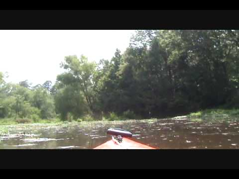 Kayaking on Lake Tangipahoa - Percy Quin State Park